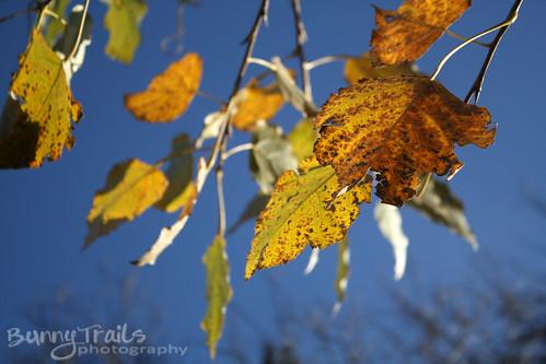 316-last leaves