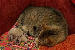Cat & Mite