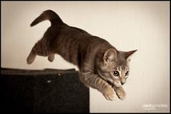 Hiplito - Super Intrpido (rulgzz) Tags: 50mm gatos gato felinos felino mascota hipolito