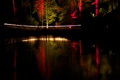 Enchanted Forest 9/45 (itmpa) Tags: wood trees light reflection tree slr water night forest canon dark scotland perthshire lit loch enchanted enchantedforest pitlochry 30d faskally canon30d faskallywood lochdunmore lightingshow bigtreecountry tomparnell itmpa archhist