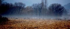 rain and fog in the valley. . . . (Ed Brodzinsky) Tags: november trees sunlight fallfoliage autumncolor elkcreek schenevus otsegocounty edbrodzinsky