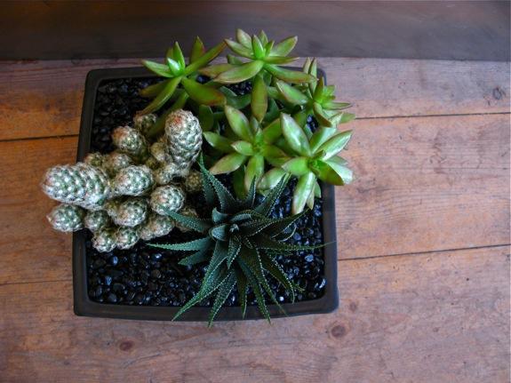 plantings 002
