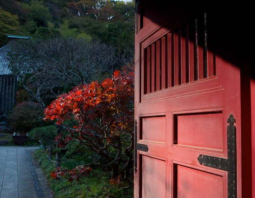 Red door red tree