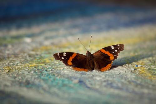 via butterfly