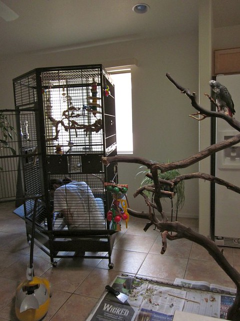 African Grey cage and playstand