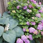 Summer's bloom thumbnail