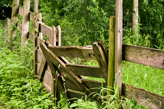 fence (abbigail may) Tags: fence farm wooden green woods locked broken posts