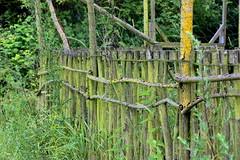 Green Fence (Von Noorden her) Tags: fence zaun zäune natur nature holz wood ast äste mold moos moss branch branches green brown braun grün reclaim