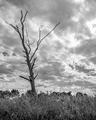 This is a stick up (Stickyemu) Tags: stick branch wood tree clouds landscape blackandwhite bw monochrome nikond7100 nikon1755mm28dx