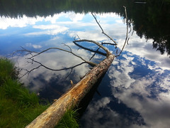 Reflection in forest lake (kehworks) Tags: forest norway boreal reflection lake