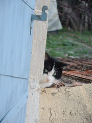 Présence féline (Microzelle) Tags: volet provence chat cat felin animaux animal