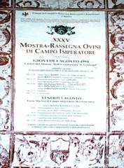 Castel del Monte (AQ), 1994,  Raduno di ovini abruzzesi in località Campo Imperatore. (Fiore S. Barbato) Tags: italy abruzzo campo imperatore gran sasso gransasso raduno ovini transumanza
