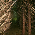 thru the trees thumbnail