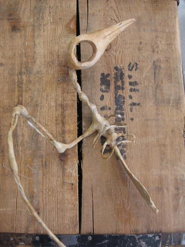 seagull skeleton