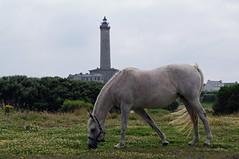 Bretagne - le de Batz (O!i aus F) Tags: horse lighthouse france faro caballo cheval frankreich brittany roscoff bretagne breizh osm francia cavallo phare pferd leuchtturm atlantik finistere bretagna k7 ledebatz