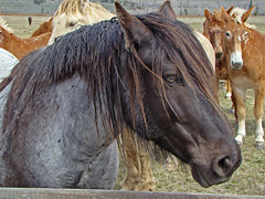 Uniqueness (dbushue) Tags: horse nature animals golden chocolate unique gray domestic wyoming tetons mammals 2009 wildllife naturesfinest coth supershot naturesgarden itsawonderfulworld citrit theunforgettablepictures moosejunction damniwishidtakenthat alittlebeauty dragondaggerphoto naturallywonderful