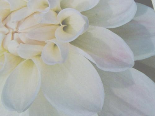 bloom1.jpg