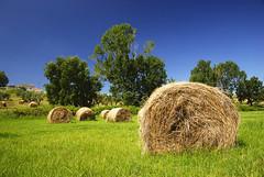 Farmville_01 (ezcrope) Tags: nikon farm farmville hay nikkor bails d80 1685mm