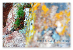 Biological weathering (Thushan Sanjeewa) Tags: lichens ynp yellowstonenationalpark grass biologicalweathering weathering thushansanjeewa thushan bravo magicdonkey wyusa life dof volcanic stone plant rock plantonrock nature explore naturewatcher saskatoon sanjeewa vacation travel