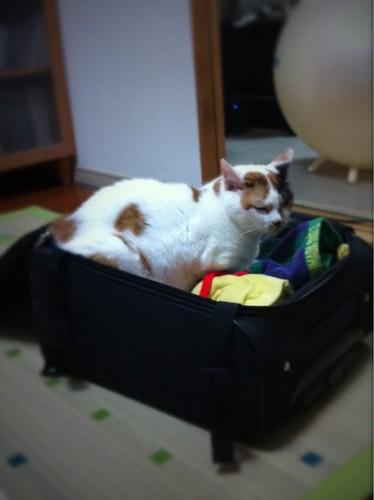 旅行の準備してたら…入ってたww