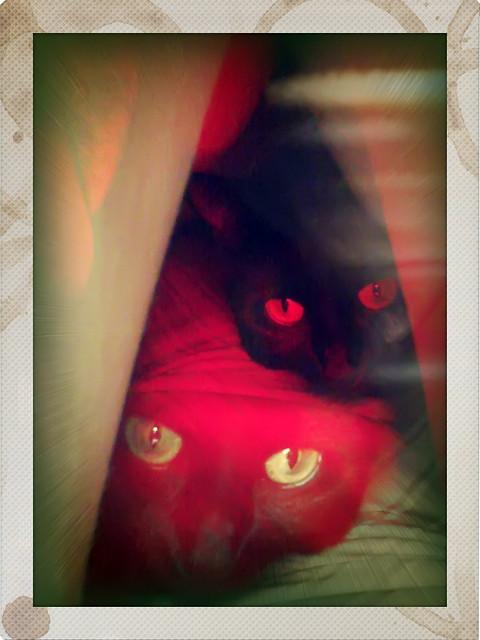 Lula under my leg