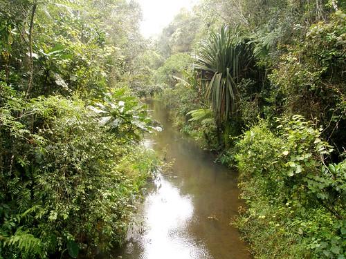 Parque Nacional de Andasibe