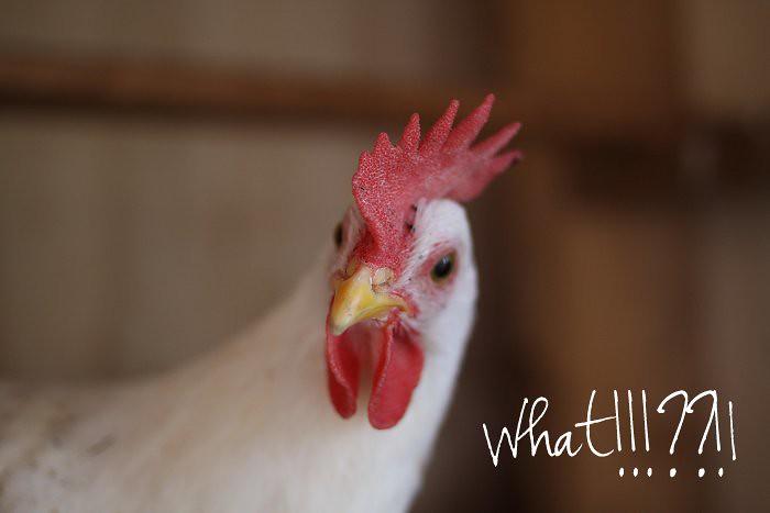 09-05-hens4