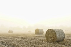 fields and the fog (algo) Tags: uk england white field topv111 misty fog interestingness topf50 europe chilterns harvest foggy straw explore fields bales algo topf100 stubble 100f explore63 thechilternhills 100907