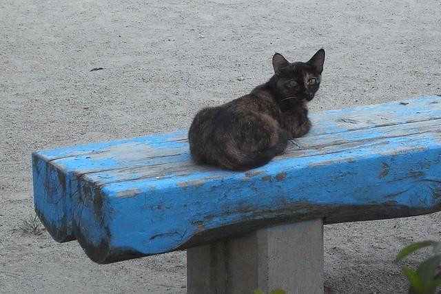 Today's Cat@2010-09-07
