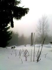 Winter, Taunus (jan kuenzel) Tags: schnee winter snow tree leaves fog forest germany deutschland nebel laub atmosphere wald taunus baum atmophäre
