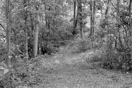 Pine Bush September 5 2010 Scan-100910-0011