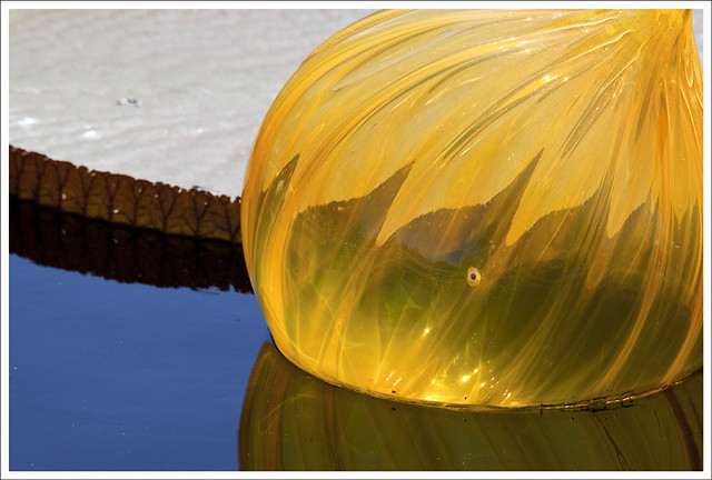 Chihuly at Missouri Botanical Garden 3