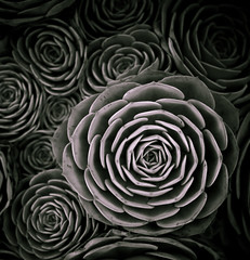 Circles Within (~ superboo ~ [busy busy]) Tags: bw plant flower monochrome 50mm petals cloudy farm circles lavender maui round toned prickly concentric hypnotic nested within f12 mesmerizing concentricity aliikula
