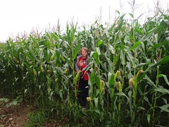 Crossing the field of corn Photo