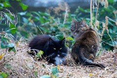 Feral cats by Guadalupe River