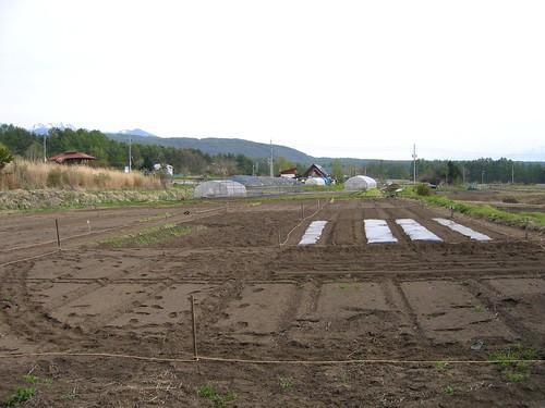 今年の畑(手前) 2009年5月3日 by Poran111
