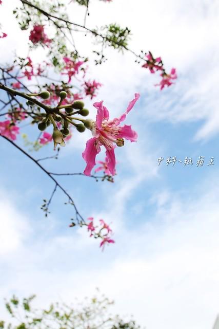 外拍作品~中科紙箱王~紅茶 ^ ^