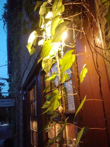 Foliage in Light