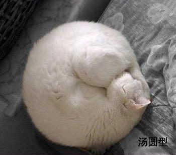 貓的睡姿04