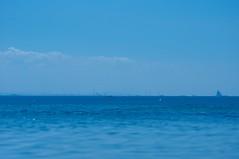 『大海を泳ぐアリ(夢分析)』の画像