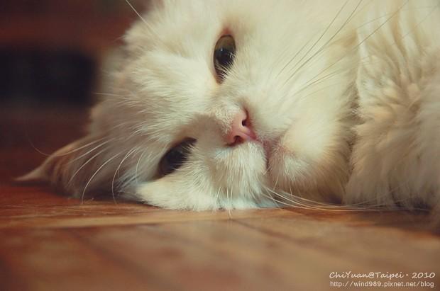 [叮叮]Cat。想念著溫暖的妳