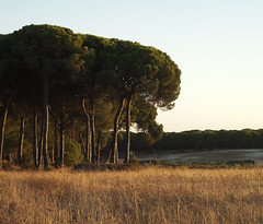 Parque Nacional de Donana at Sunset (Clare Havill) Tags: park parque trees sunset holiday grass de spain august seville national nacional 2010 doñana donana doñananationalpark donananationalpark trixilious andualusia