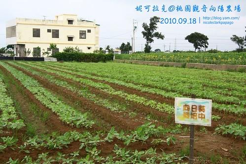 桃園觀音向陽農場20100918-052
