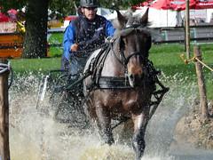 powerhorse001 (Alisah1) Tags: arnhem paard paarden presikhaaf koudbloed powerhorse paardekracht