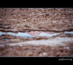 Mountains reflected (josefrancisco.salgado) Tags: chile reflection nikon desert desierto nikkor salar cl d3 sanpedrodeatacama salardeatacama saltflat desiertodeatacama atacamadesert repúblicadechile 70300mmf4556gvr reservanacionallosflamencos republicofchile iiregióndeantofagasta provinciadeelloa
