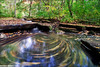 Leaf Swirl (benjacobsen) Tags: waterfall nd 5d 1022 stepstonefalls