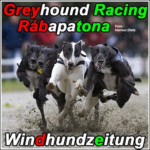 Greyhound Racing Rábapatona, Ungarn