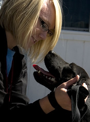 student petting dog during an animal advocacy project