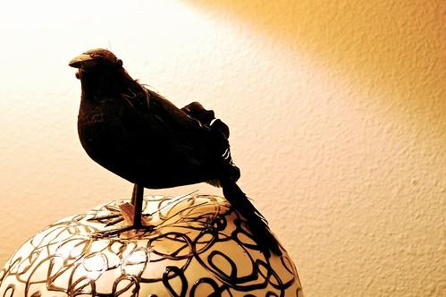 Blackbird & Swirl 2