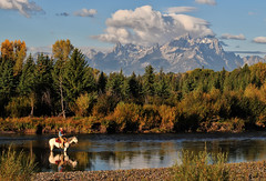 A Fly Fisherman on Horseback in the Tetons (Jeff Clow) Tags: vacation river fisherman getaway snakeriver serene flyfishing wyoming horseback grandtetonnationalpark jacksonholewyoming buffalofork